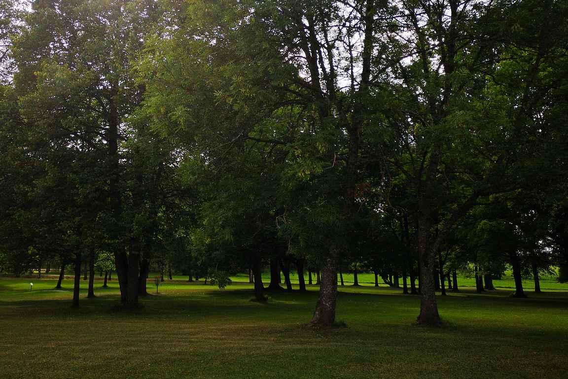 Mustialan frisbeerata sijaitsee kauniilla puistoalueella.