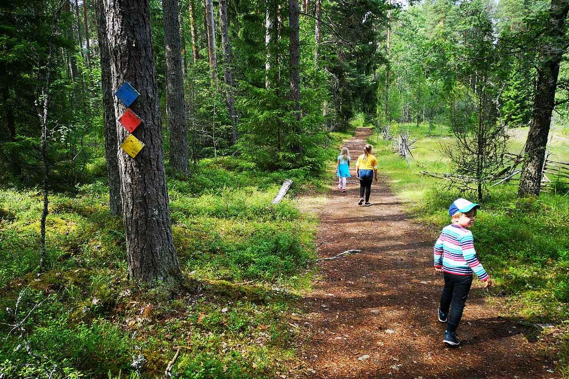 Liesjärven kansallispuistossa on useita eri-ikäisille lapsille sopivia patikointireittejä.