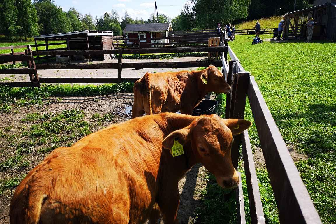 Kotieläinpuisto Farmi on pienten lasten mieleen.