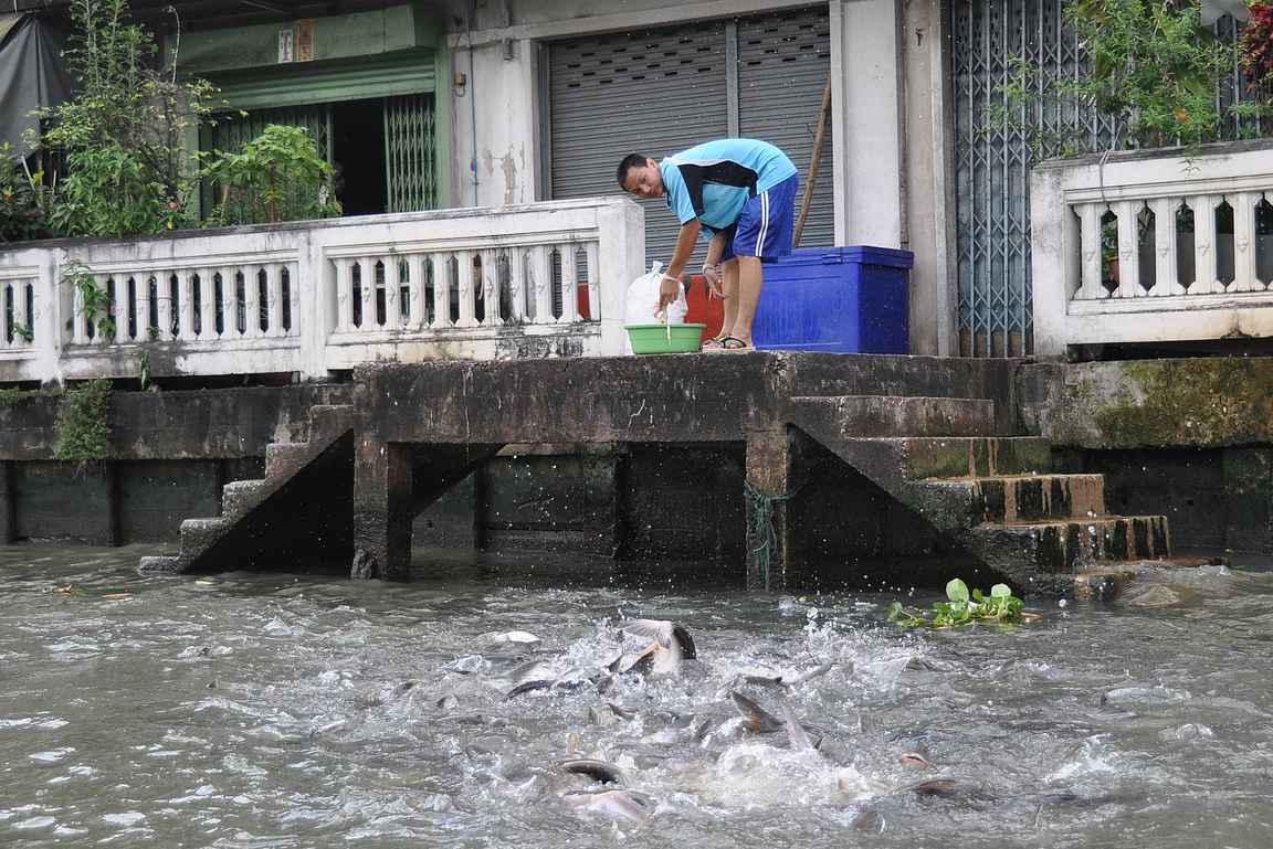 Kanavien varrella näkee erilaista Bangkokia eläimineen.