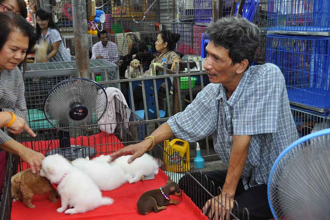 Chatuchakin viikonloppumarkkinat eivät sovi kaikille -esimerkiksi monet surevat eläinten kohtaloa.