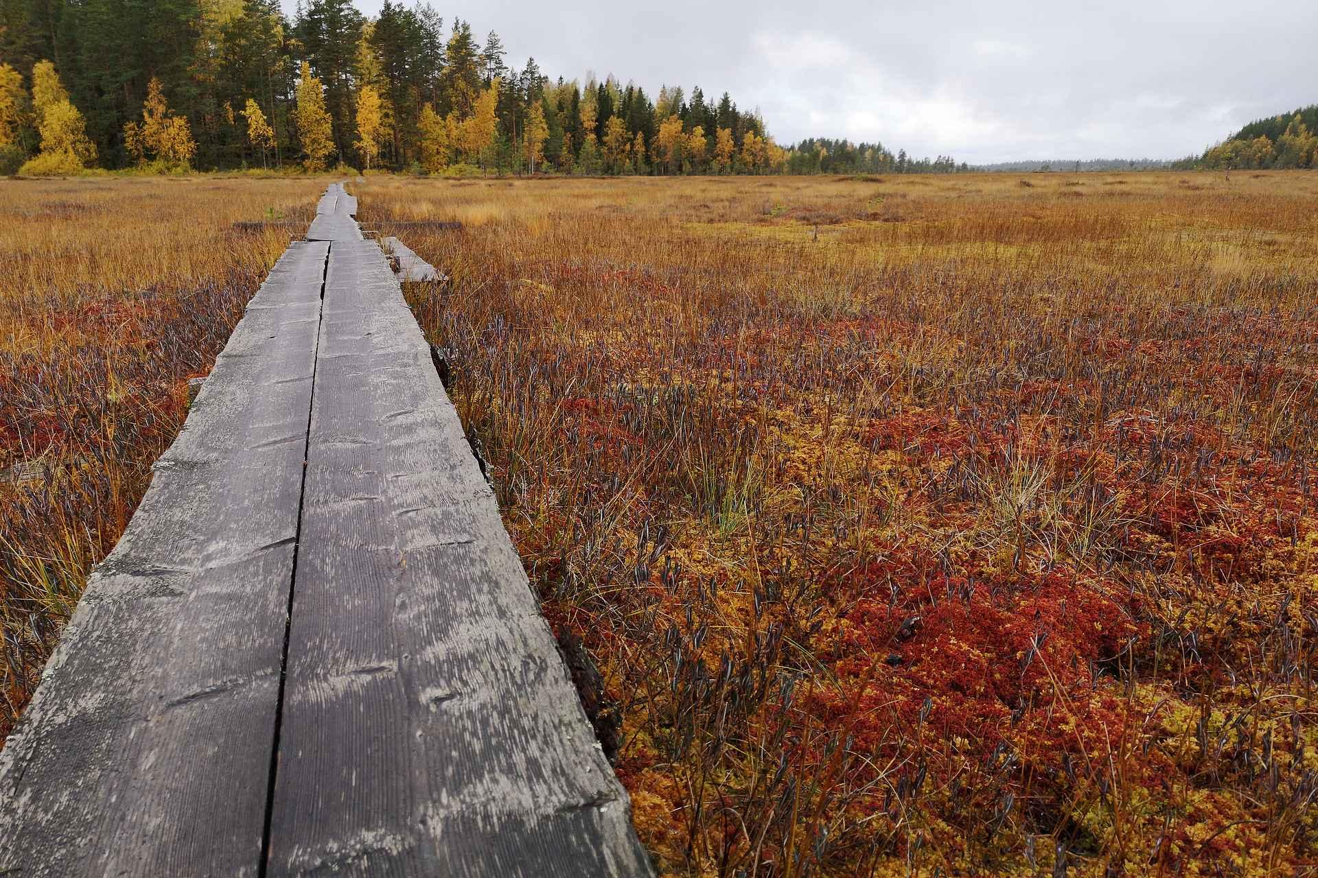 Siikanevan upea suoalue ja sen väriloisto on parasta syksyllä.