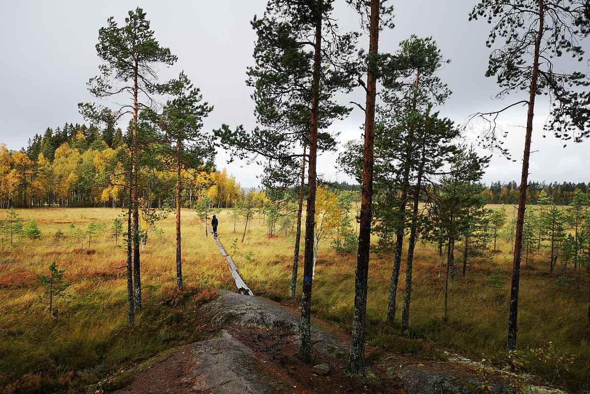 Siikaneva on erinomainen retkikohde Pirkanmaalla.