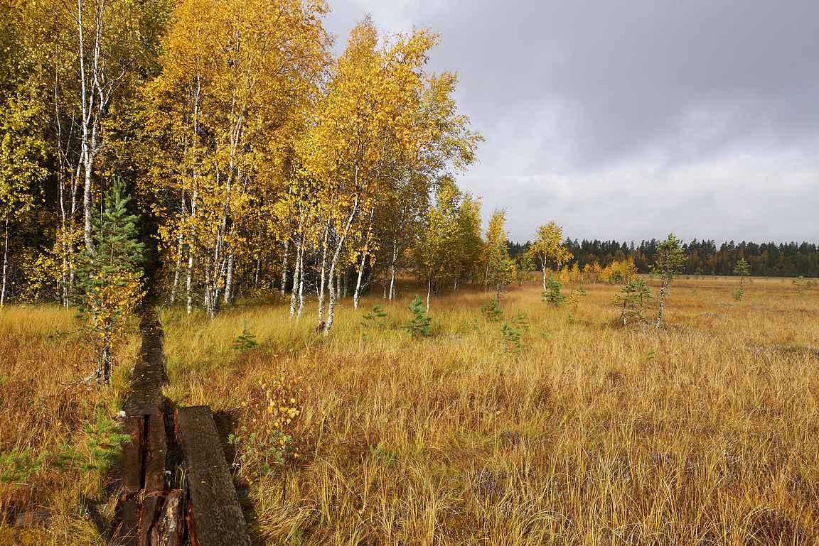 Syksyn väriloistoa parhaimmillaan. Muutamat kärsineet pitkospuut eivät retkeilyiloa pilanneet.