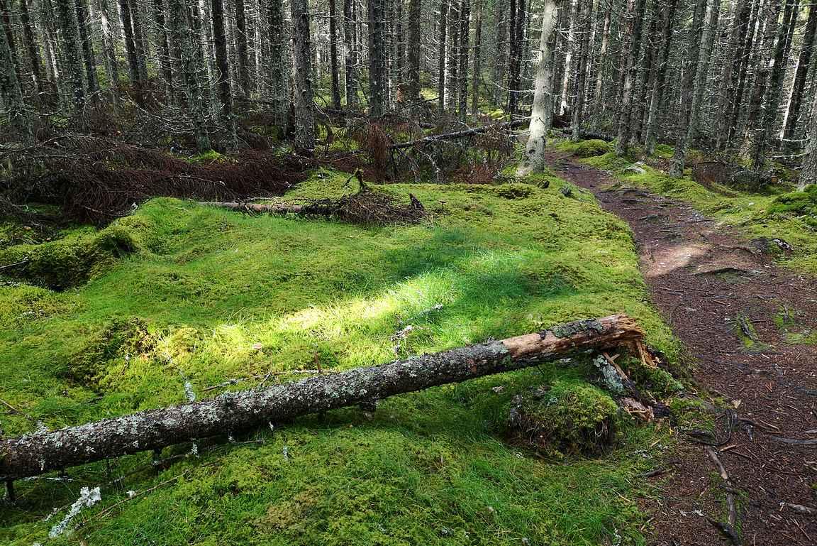 Siikanevan metsäosuudet ovat varsin leppoisia.