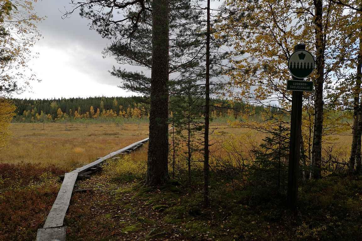 Luonnonsuojelualueen loppuessa loppumatka kulkee metsikössä.