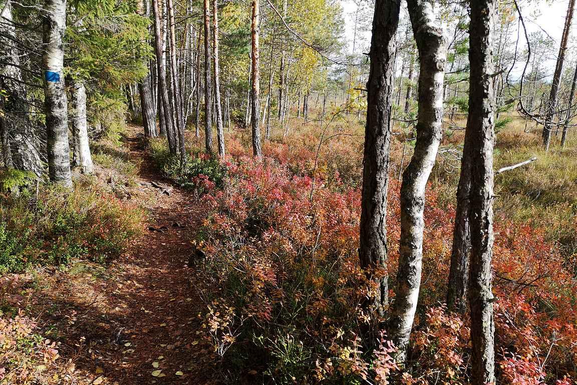 Kyllä loppumatkan metsäosuudelta myös väriloistoa löytyi.