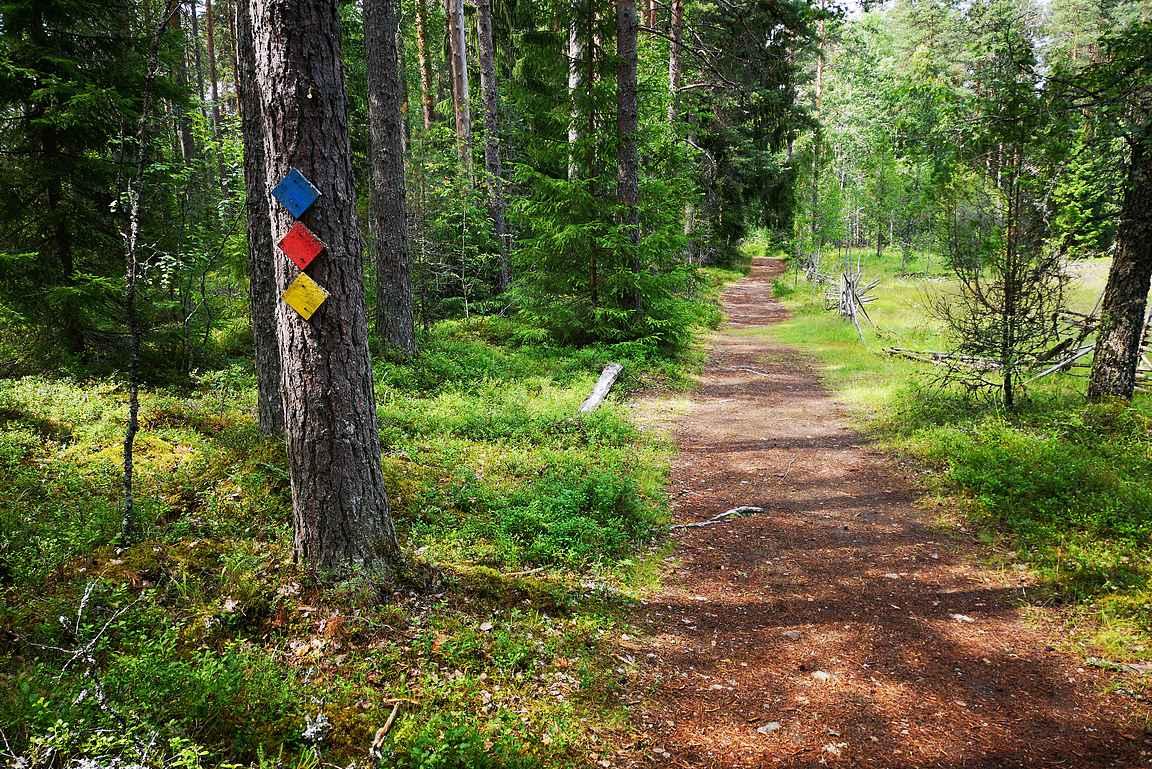 Liesjärven kansallispuistossa on useita eri reittimahdollisuuksia.