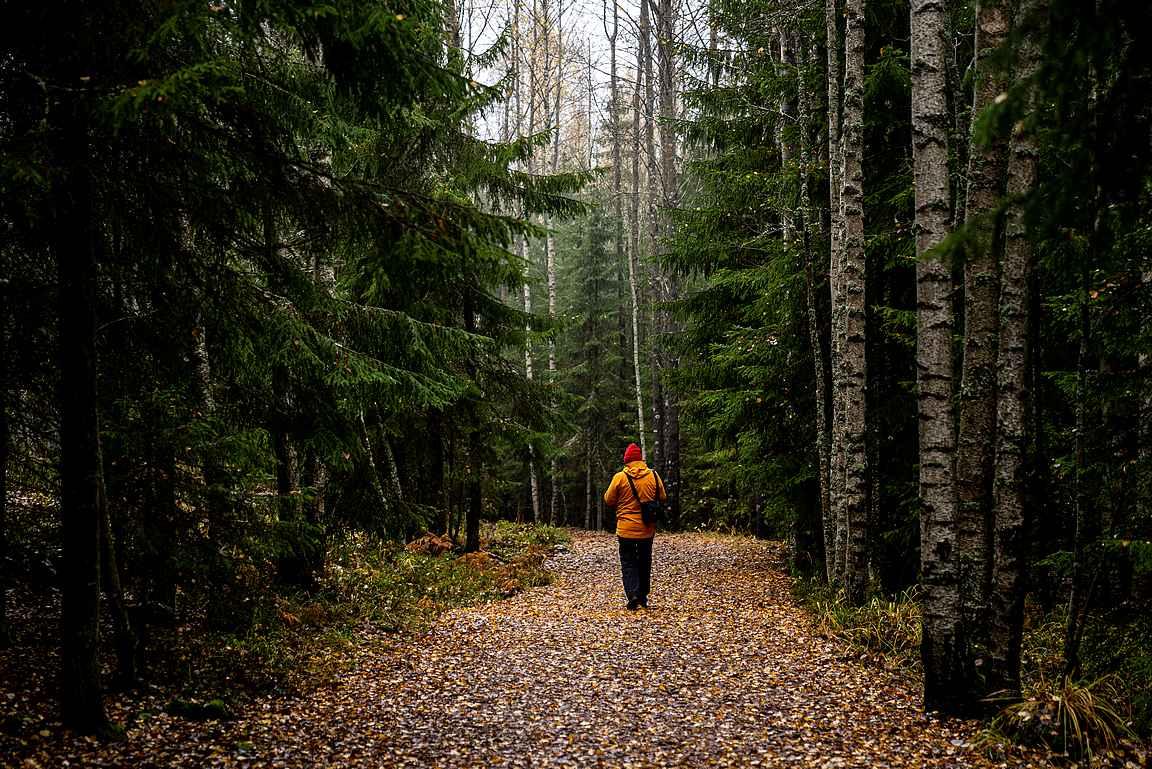 Hämeen Ilvesreitti lähtee Torronsuon kansallispuistosta kohti Hämeenlinnan Ahvenistoa.