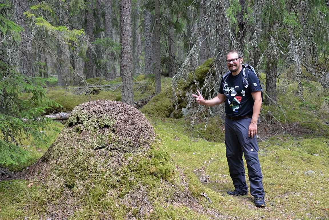 Liesjärven kansallispuistossa on mukava ihmetellä luonnon ihmeitä.