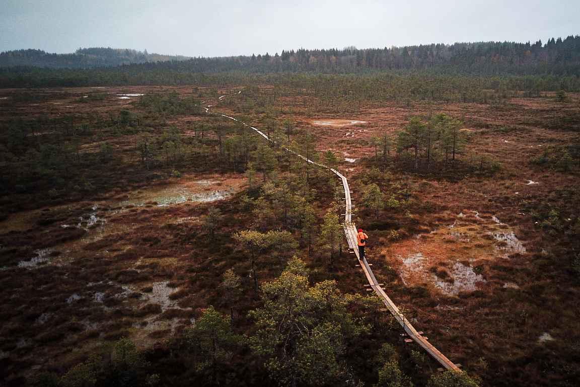 Torronsuon kansallispuisto upea suoalue on Suomen kauneimpia luontokohteita.