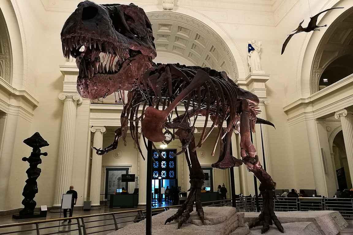 Museovinkki: Luonnontieteellisen museon dinosaurukset ovat vaikuttava näky. Tämä kuvassa oleva