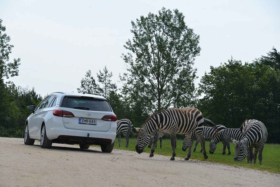 Givskudin eläintarhan safari ajetaan omilla autoilla.
