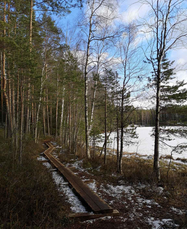 Kintulammen luonnonsuojelualue - vuoden 2020 retkikohde.