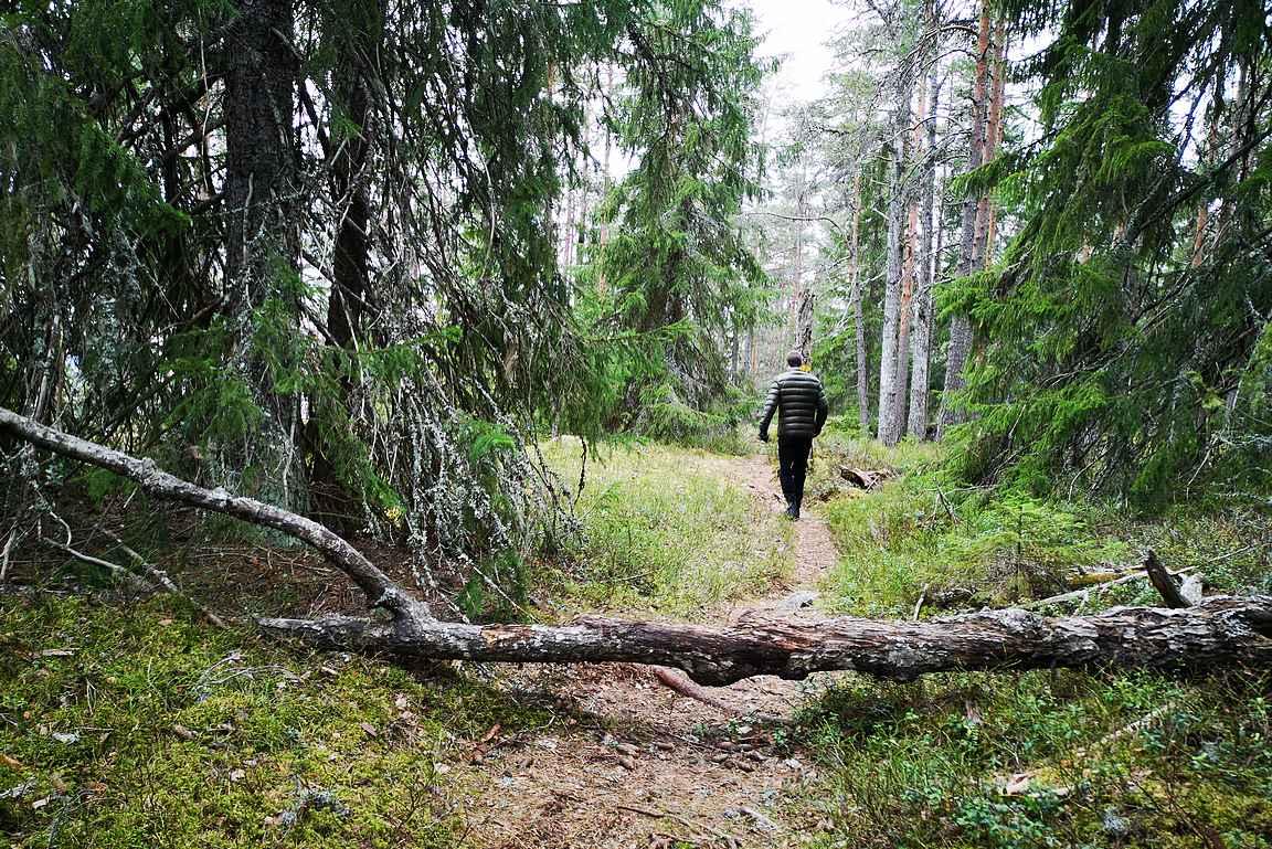 Alkumatka noustaan jyrkästi kohti kallioita, jonka jälkeen nousu tasoittuu kauniissa metsämaisemassa.