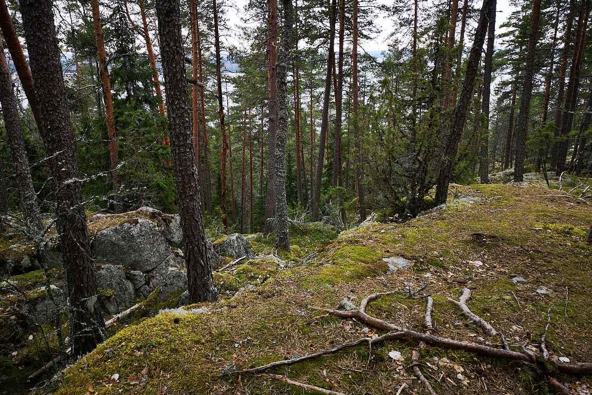 Eräpyhän kalliot ovat korkeimmillaan 80 metriä Längelmäveden yläpuolella.
