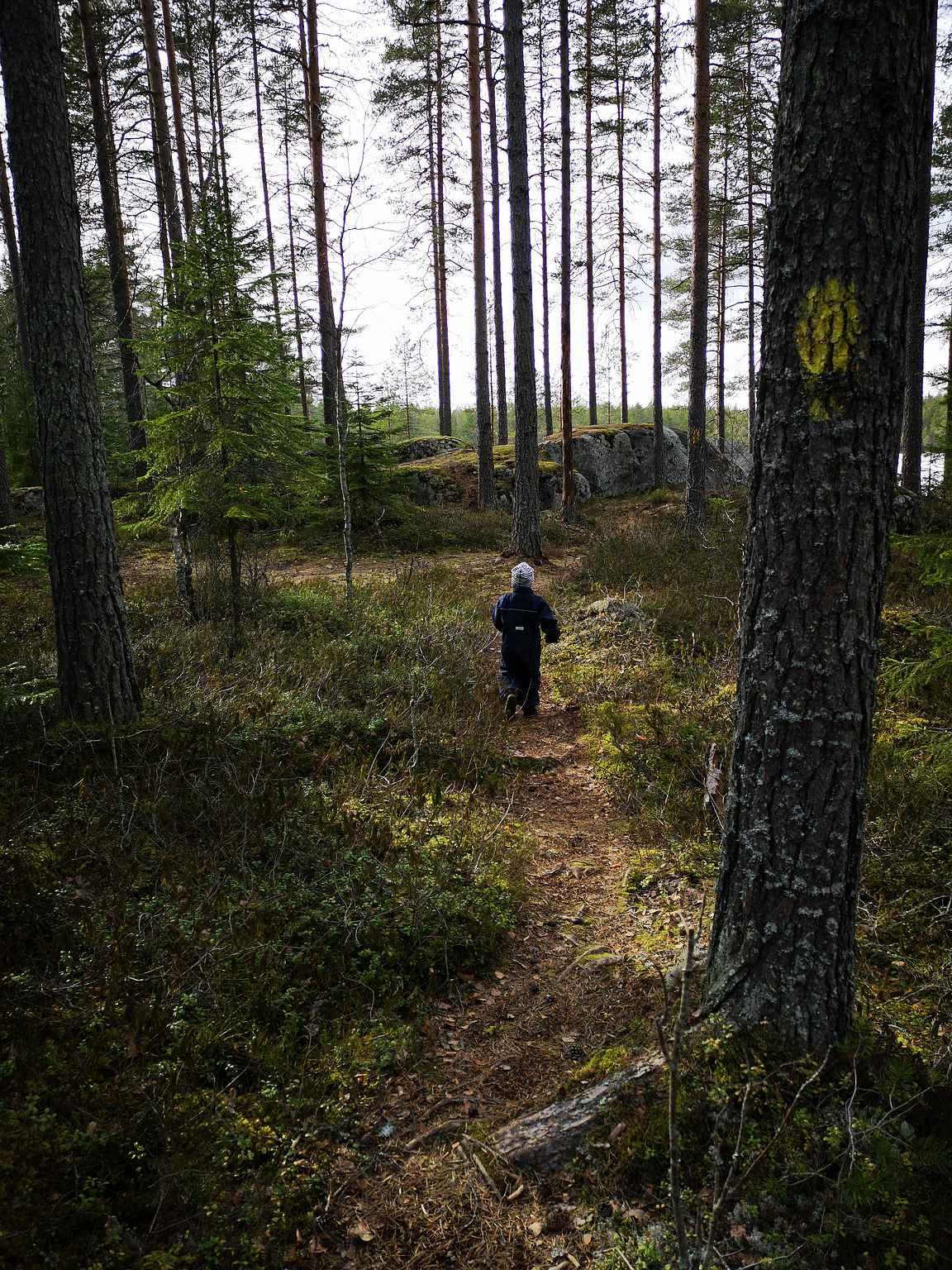 Osan matkaa oli kyllä ihan leppoistakin metsäosuutta.