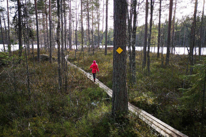 Ritajärven luonnonsuojelualue tarjoaa upeita järvimaisemia