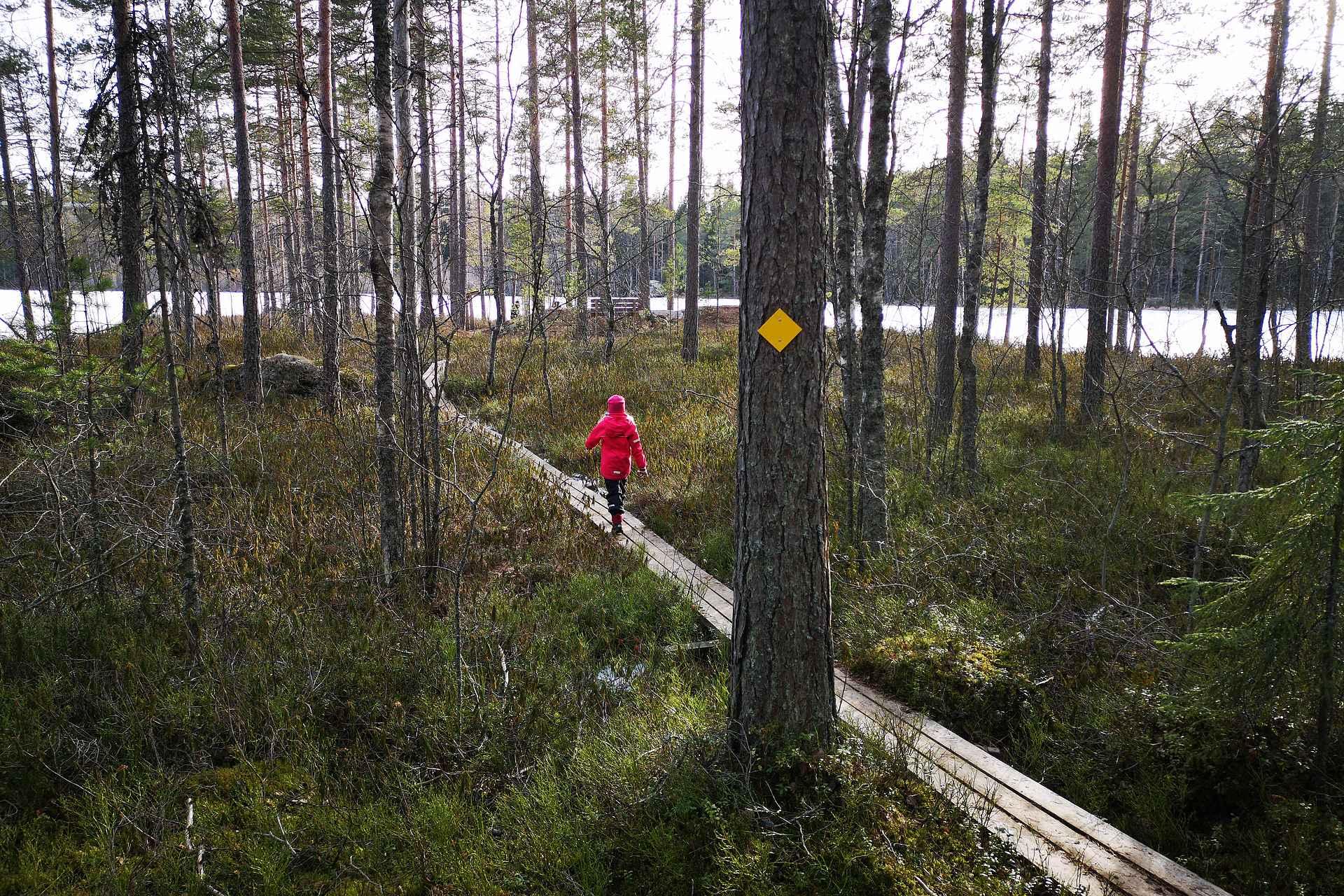 Keltainen reitti kiertää Alisen Ritajärven.