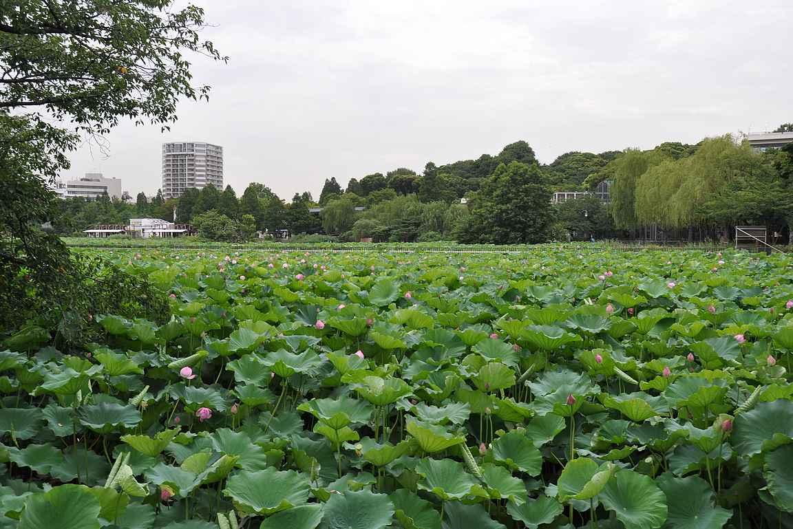 Ympäri Tokiota on useita upeita puutarhoja kuten tämä Uenon puutarha.