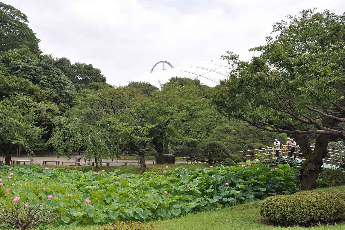 Puutarhan aidan toisella puolella sijaitseva Tokyo Dome huvipuistoineen tuo melkoisen kontrastin rauhalliseen puutarhaan.