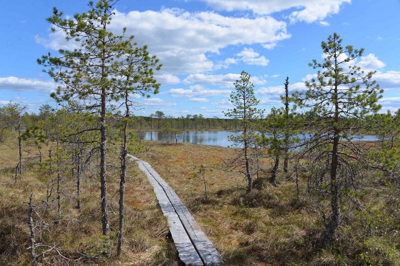 Leivonmäen kansallispuisto - retkeilijän keidas Keski-Suomessa