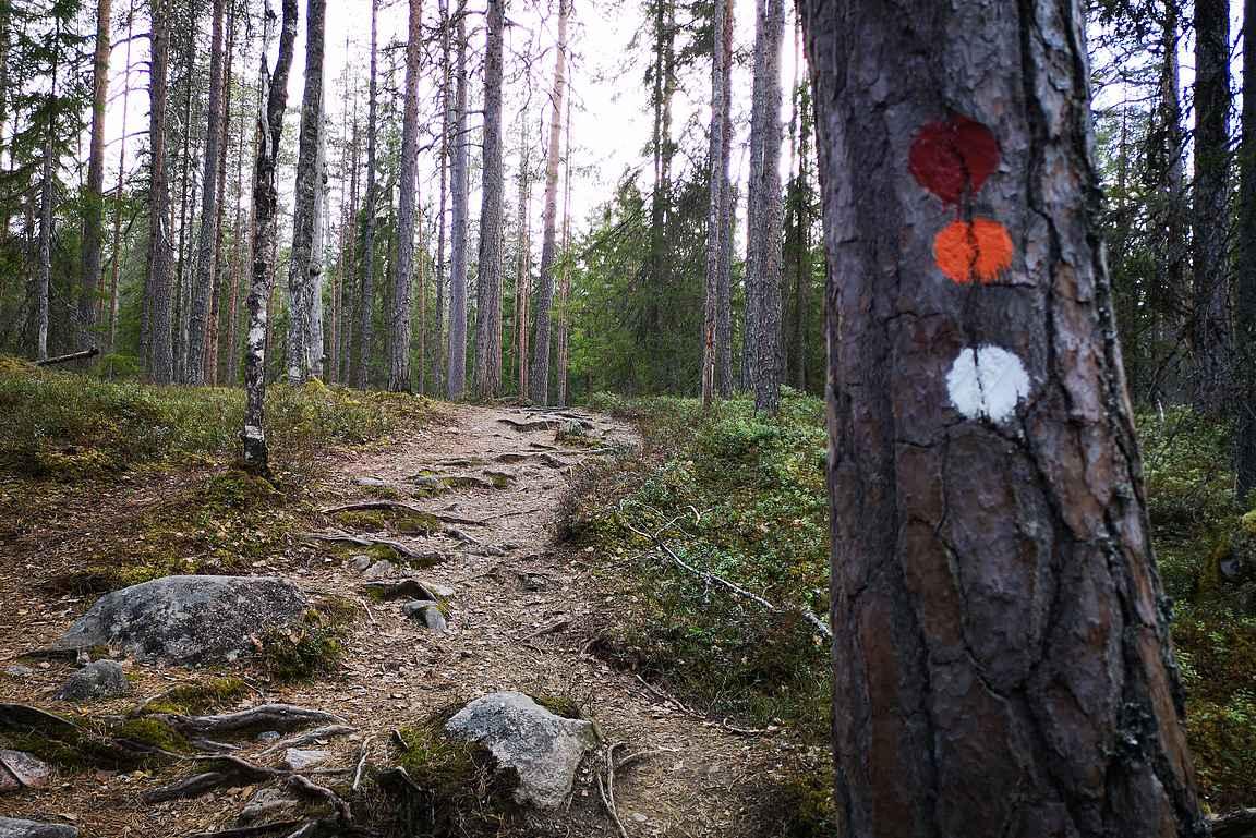 Pyhä-Häkin kansallispuiston reitit on merkitty väritäplin.