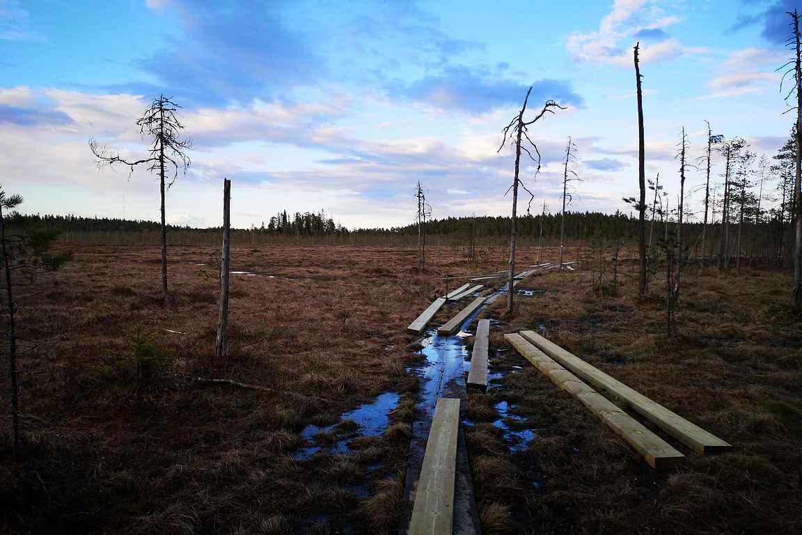 Pyhä-Häkin kansallispuistossa uusittiin huonokuntoisia pitkospuita.