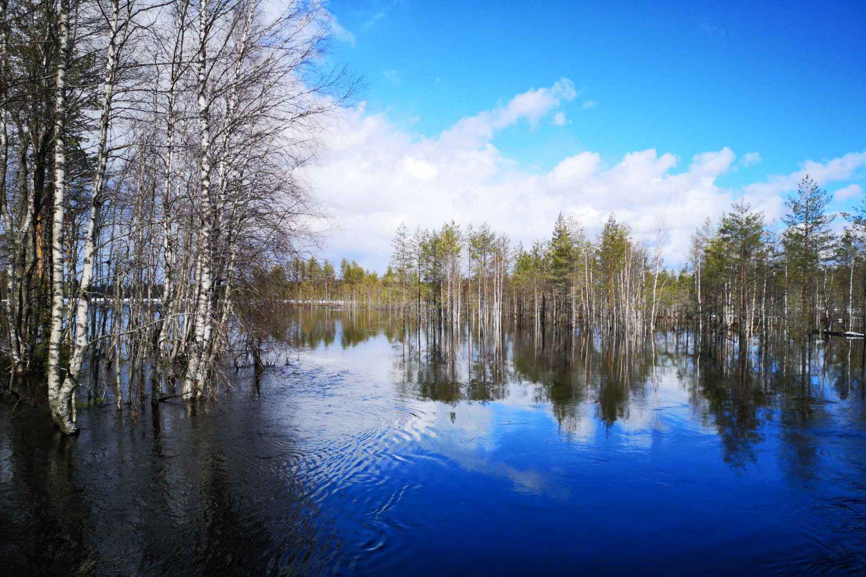 Tiilikkajärven kansallispuisto - patikoijan taivas Pohjois-Savossa