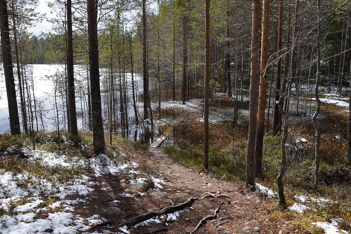 Jo menomatkalla veden varassa olleet pitkospuut olivat paluumatkalla kiertoreitin suhteen vieläkin ongelmallisempi ylityskohta.
