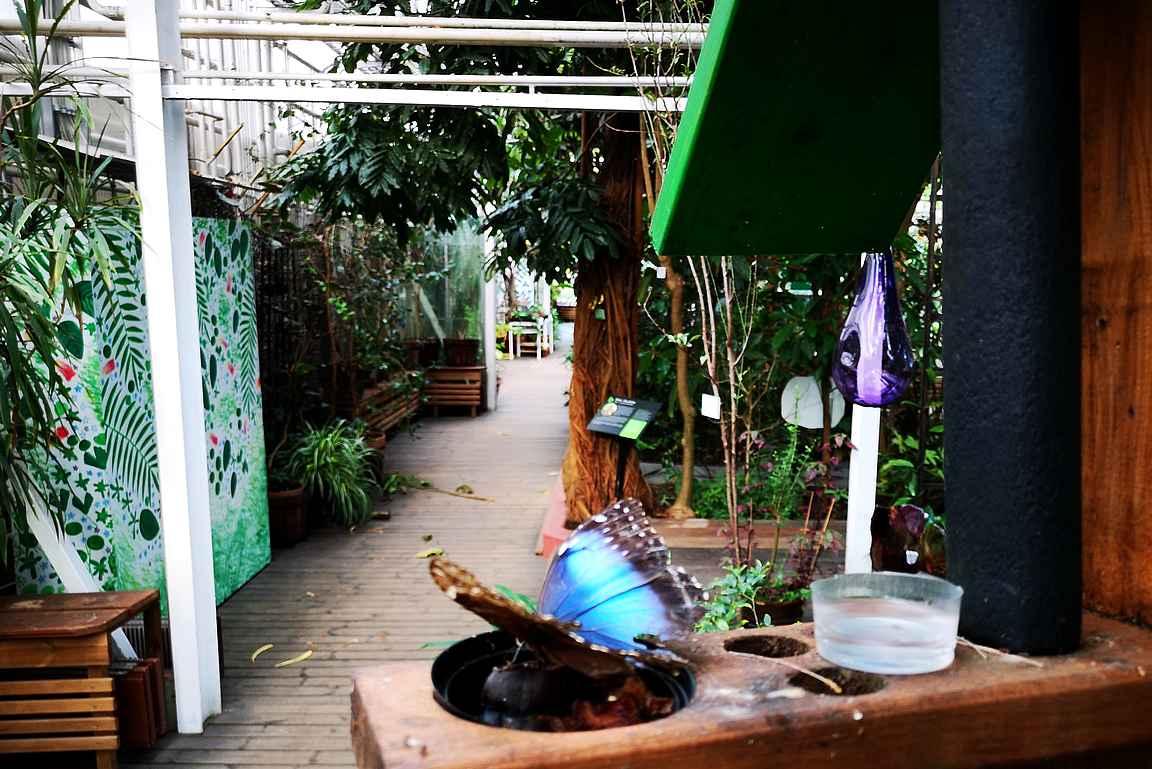 Botania ja sen perhoset ovat mielenkiintoinen vierailukohde Joensuussa.