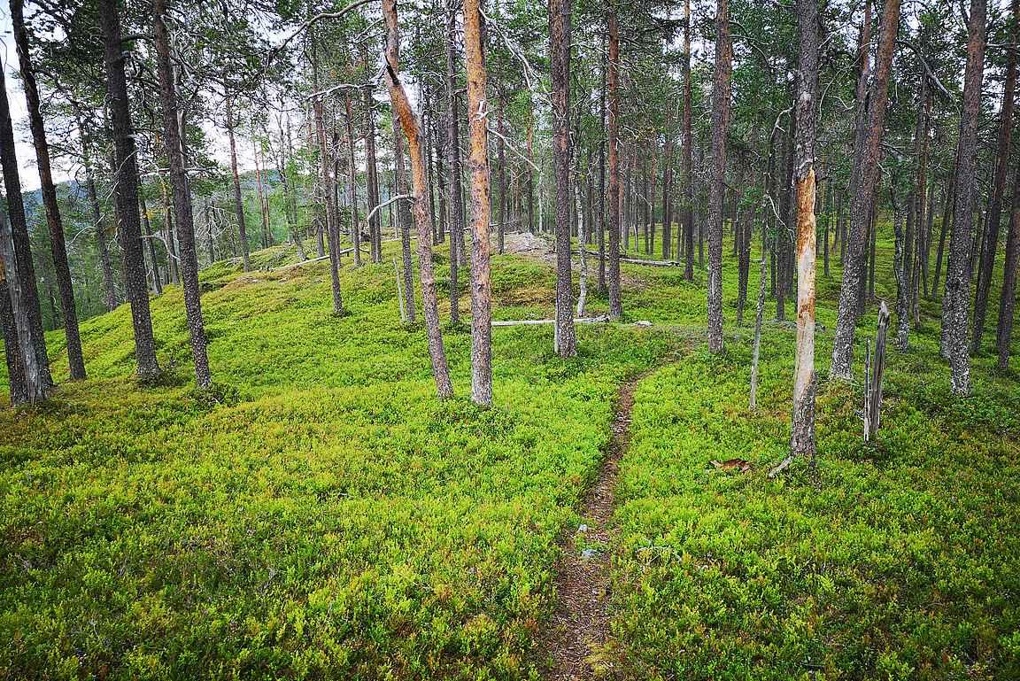 Valkeisenvaaran huipulle johdattaa kiva metsäpolku.