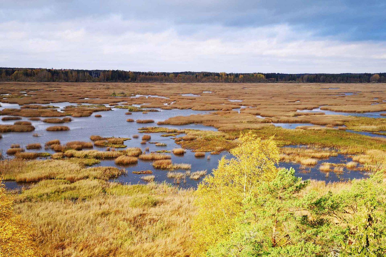 Puurijärven ja Isosuon kansallispuisto päiväretkikohteena