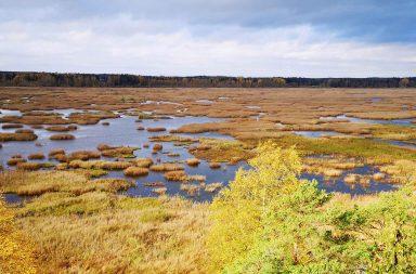 Puurijärven ja Isosuon kansallispuiston parhaat maisemat avautuvat Kärjenkallion lintutornista.