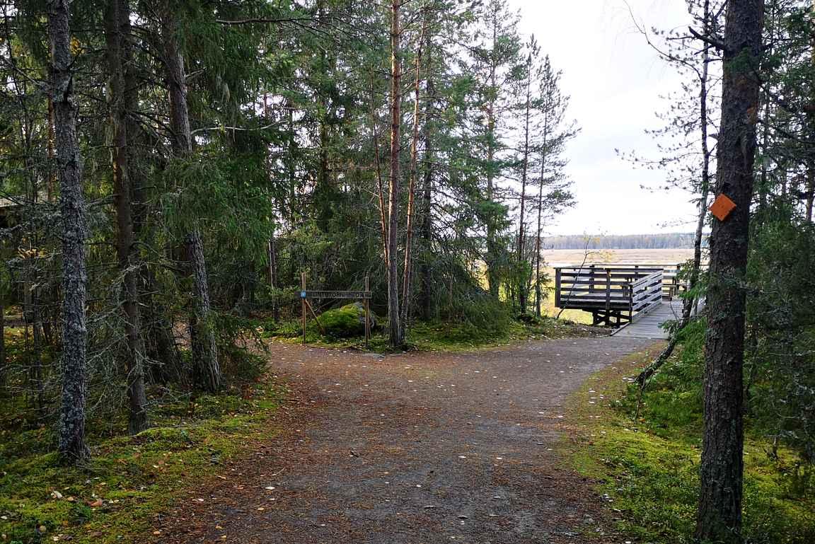 Puurijärven parkkipaikalta on 400 metriä pitkä esteetön reitti lintujen tarkkailulavalle.