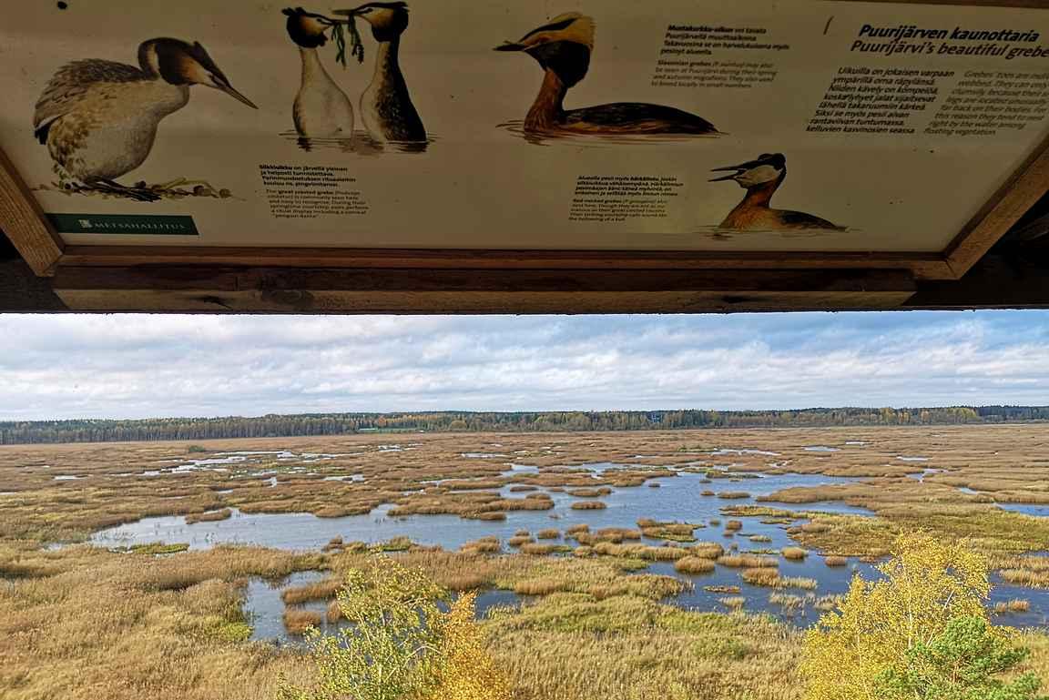 Lintutornissa on myös infotauluja alueella esiintyvistä linnuista.