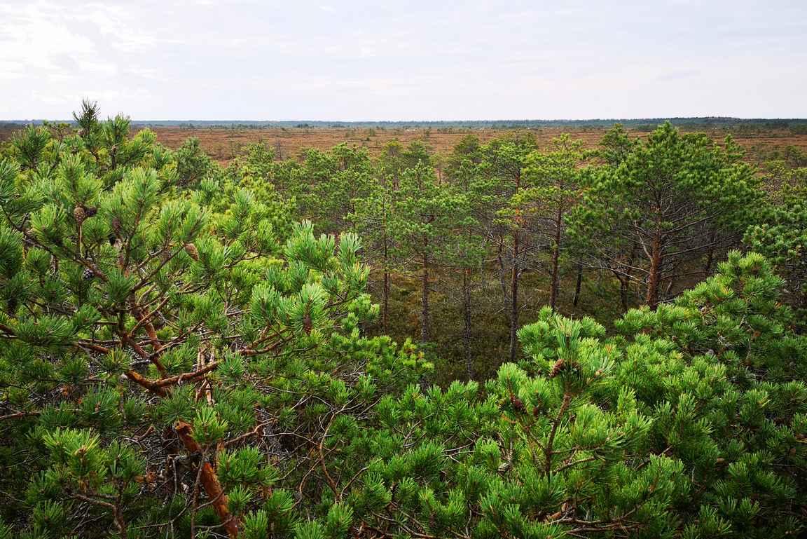 ... jonka näkymät ovat hyvää vauhtia jäämässä puiden katveeseen.