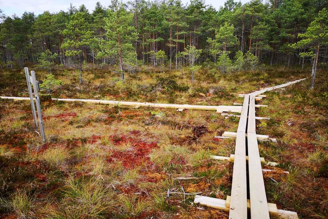 Turvesuulille lähtee 100 metrin pistoreitti luontopolulta.