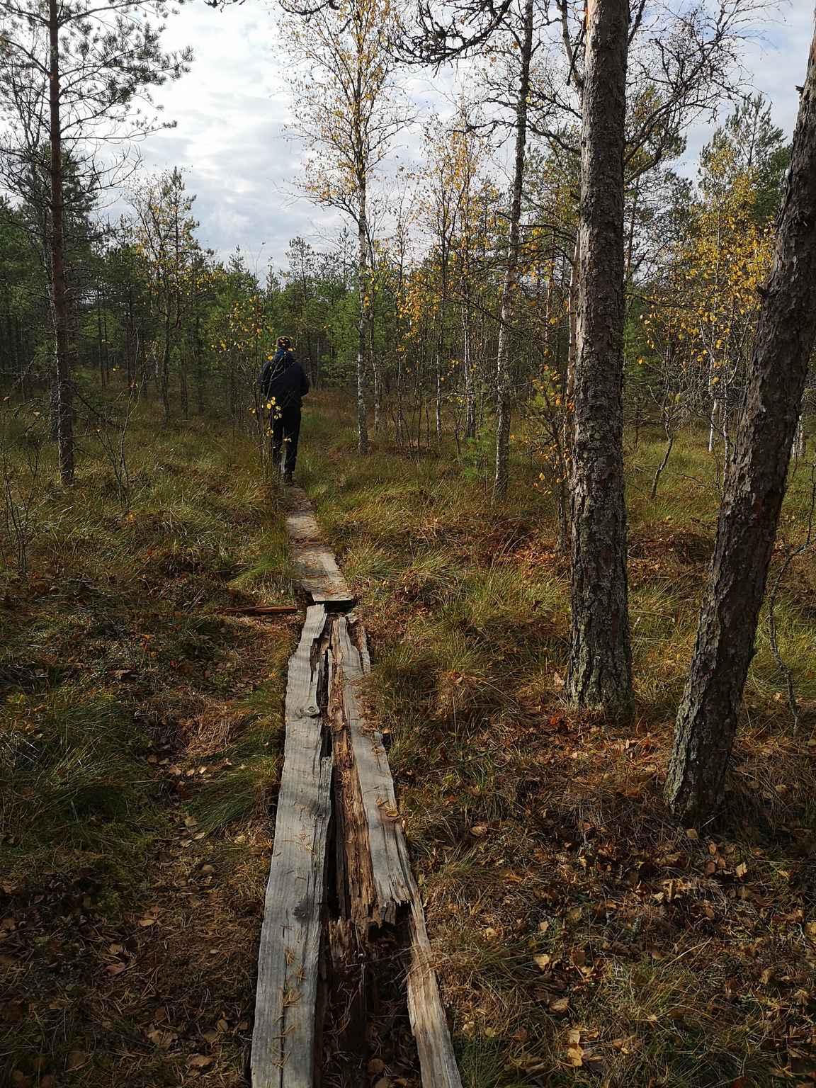 Pitkospuut ovat osin todella huonossa kunnossa, mikä kannattaa huomioida varsinkin märällä kelillä.