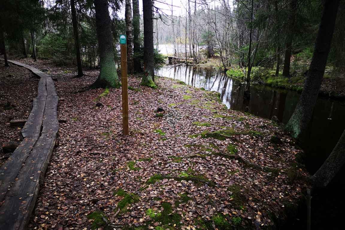 Halimasjärven luontopolku on lyhyt, mutta virkistävä kohde kaupunkilaisille.