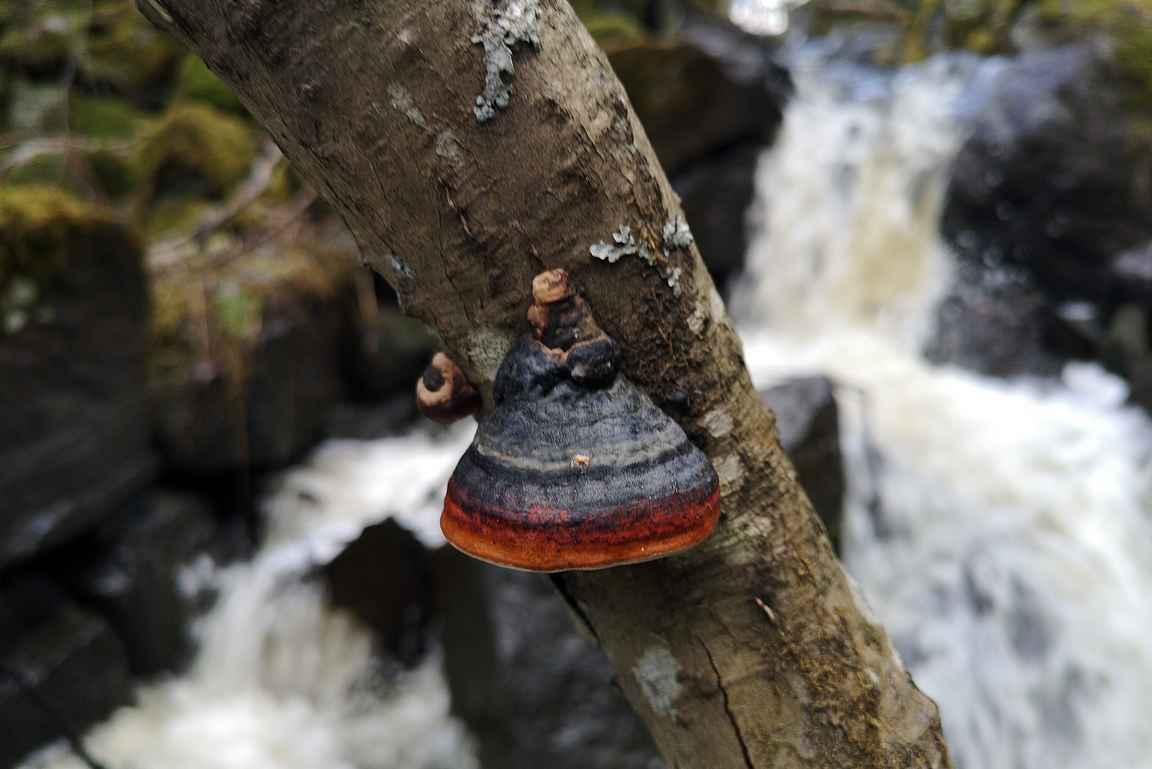 Pärrinkoski sopii hyvin myös luontovalokuvauskohteeksi.
