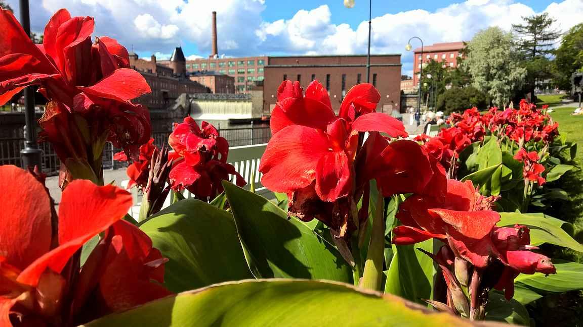 Tampere tarjoilee upeita puistoja pitkiin kaupunkikävelyihin.