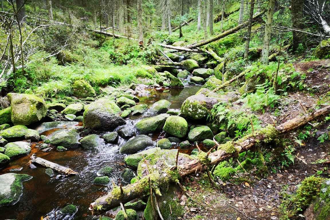 Kauhanevan-Pohjankankaan kansallispuistossa on vaihtelevia maisemia Katikankanjonin virtaavasta purosta...