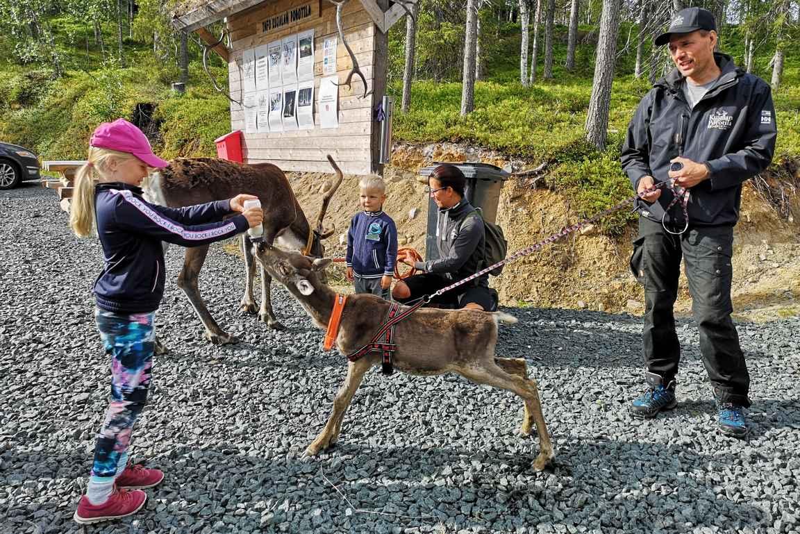 Porotilan isäntä otti vieraat vastaan porojen keran, ja nappulat sai antaa orpovasalle maitoa.
