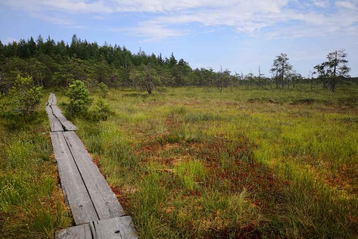 Suomaisemat ovat Valkmusan kansallispuiston kohokohta.