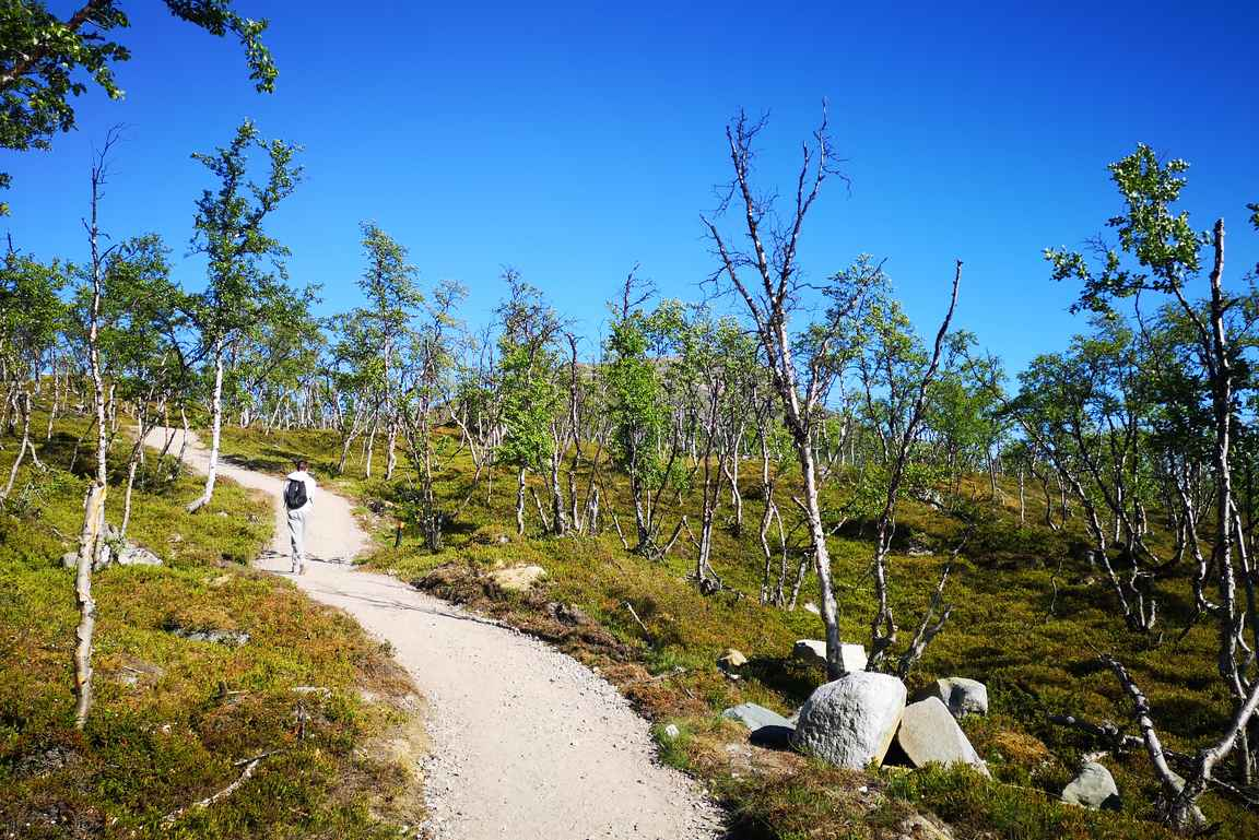 Mallan luonnonpuiston parkkipaikalta Kilpisjärven retkeilykeskukselle patikoidaan Saanan luontopolkua.